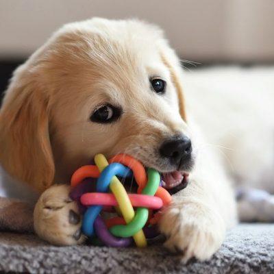 Toys & treats