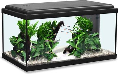 Aquarium & Fish bowls